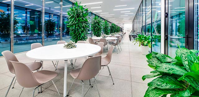 Растения в интерьере офиса