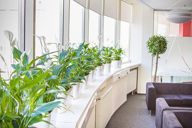 Цветы в интерьере офиса